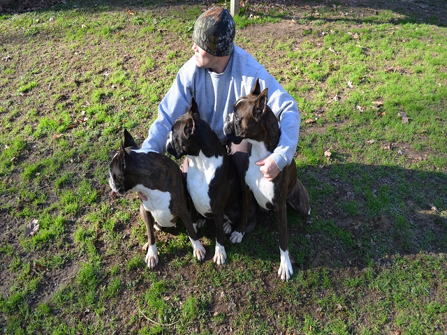 European Boxer Puppies | Boxer Puppies for Sale | European Boxer Breeder in NC |