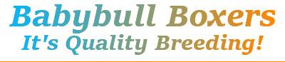 Babybull Boxers Logo